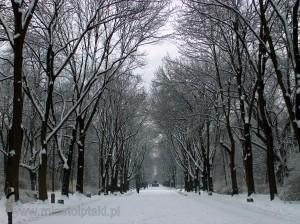 Aleja główna zimą