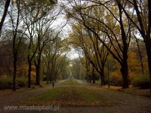 Aleja główna jesienią