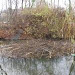 Magazyn zimowy bobrów w parku Skaryszewskim
