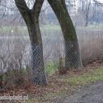 Drzewa w parku Skaryszewskim zabezpieczono siatką