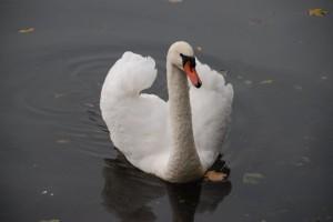 Jeśli chcemy nadal podziwiać te piękne ptaki – dajmy im odlecieć na zimę!