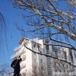 Mozolne wyplątywanie żyłki tak, aby nie uszkodzić drzewa
