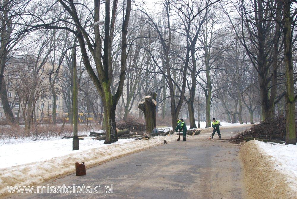 Wycinka drzew w parku Skaryszewskim