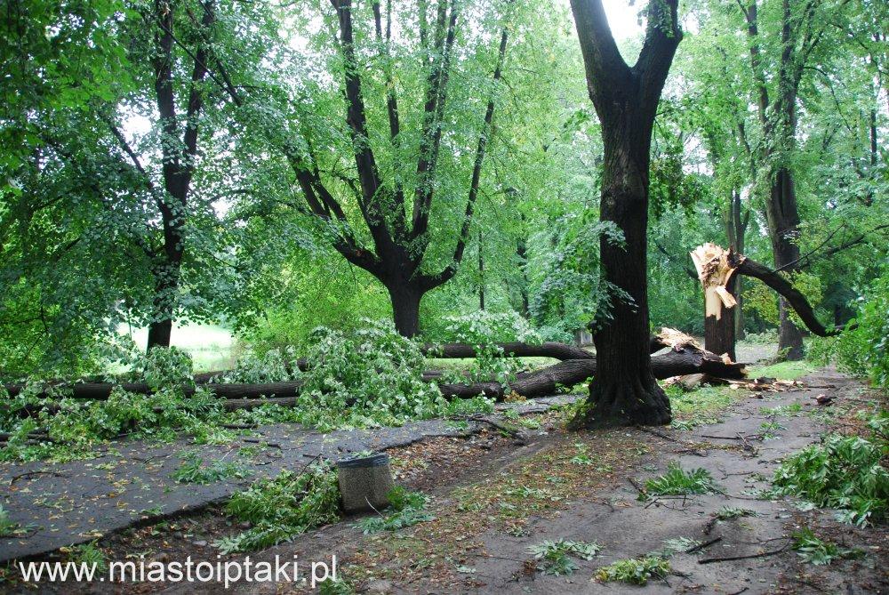 park Skaryszewski –  drzewo powalone przez wichurę
