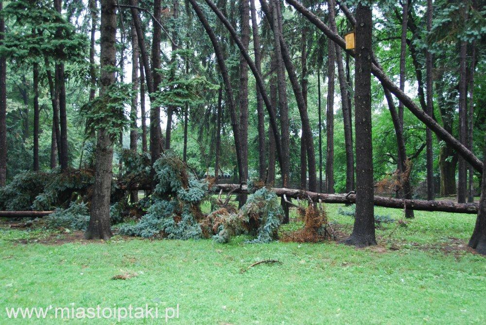 park Skaryszewski – wichura nie oszczędziła też sosen