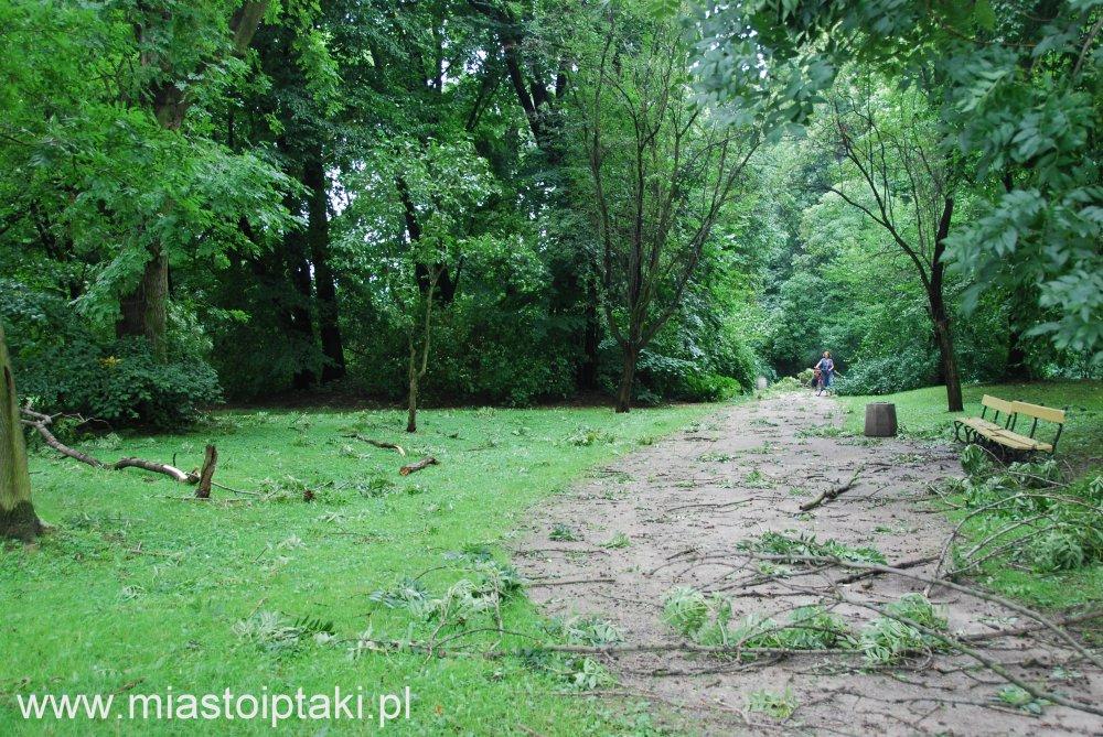 park Skaryszewski po przejściu wichury