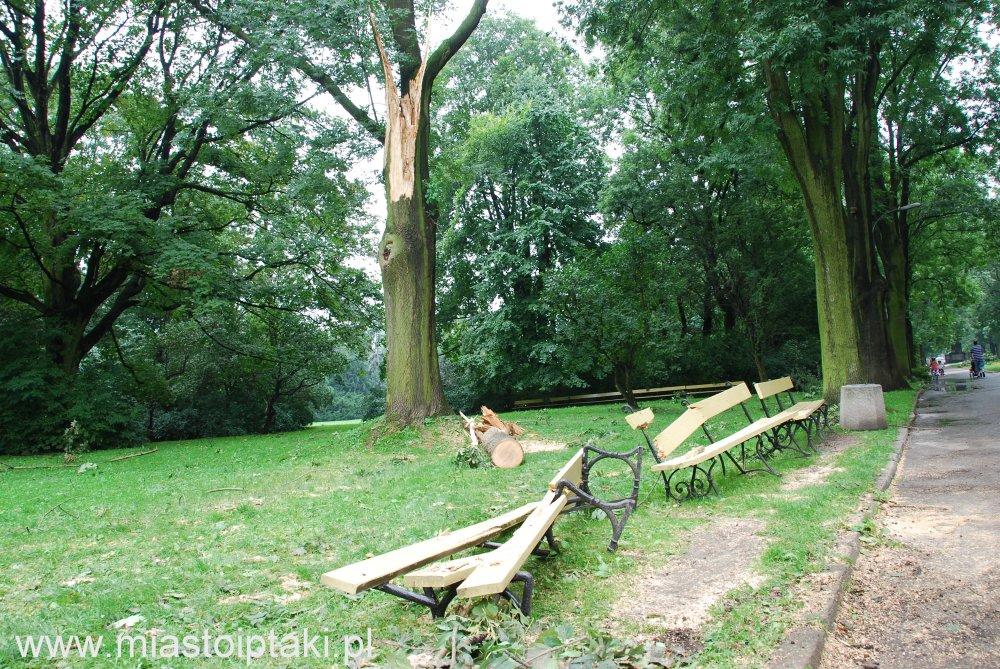 park Skaryszewski – złamane drzewo zmiażdżyło ławkę