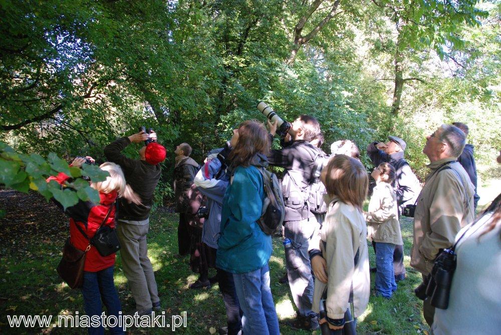Birdwatching w parku Skaryszewskim