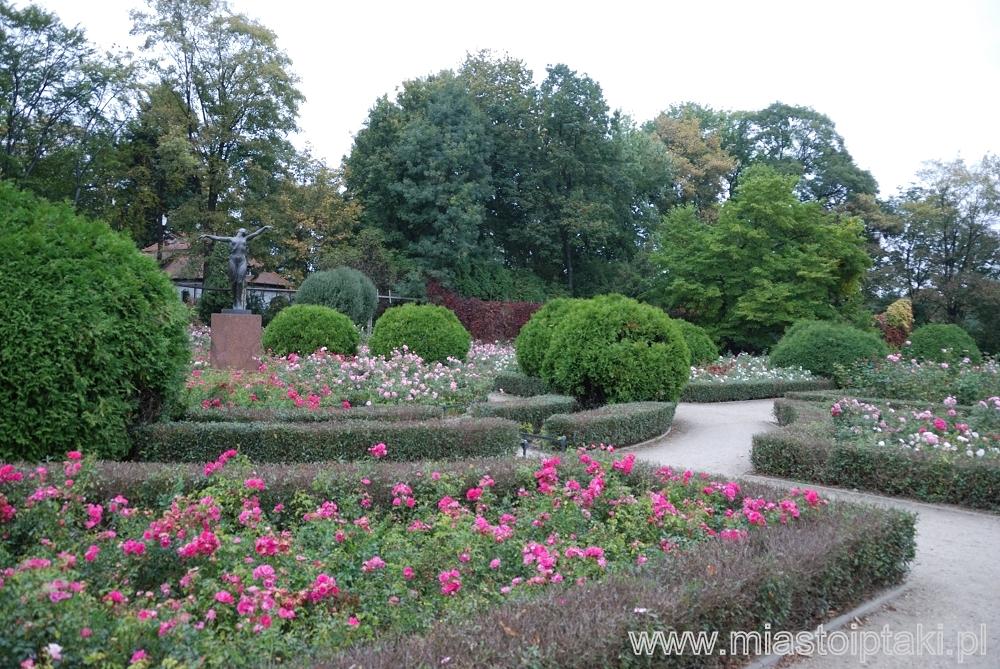 Ogród różany w parku Skaryszewskim - dzisiaj