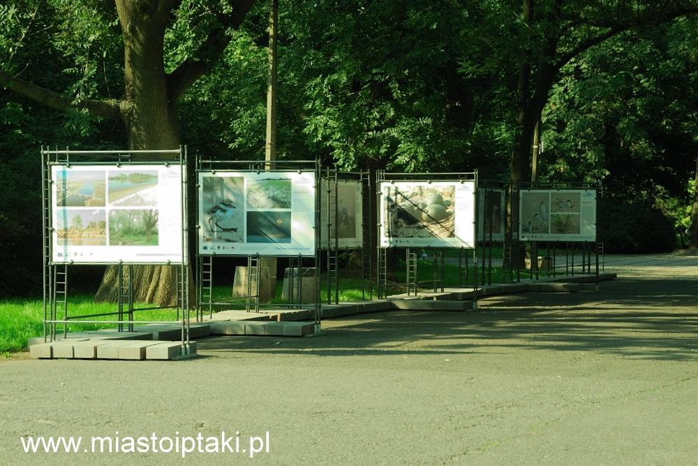 Wystawa Stołecznego Towarzystwa Ochrony Ptaków