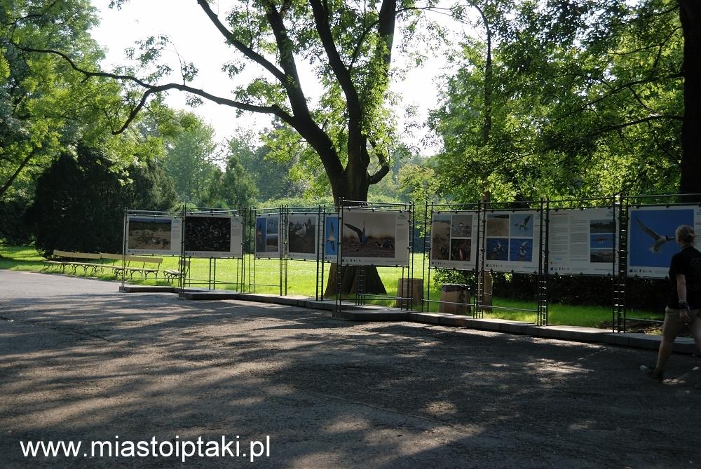 """Wystawa """"Wisła – Ptasia Stolica"""" w parku Skaryszewskim"""