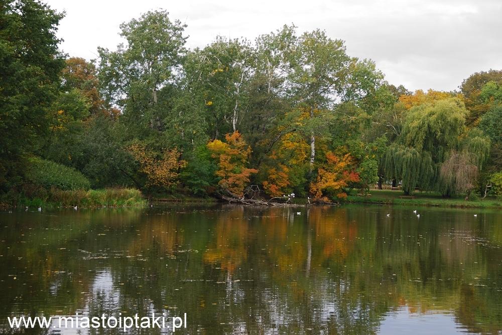 Jesień w parku Skaryszewskim
